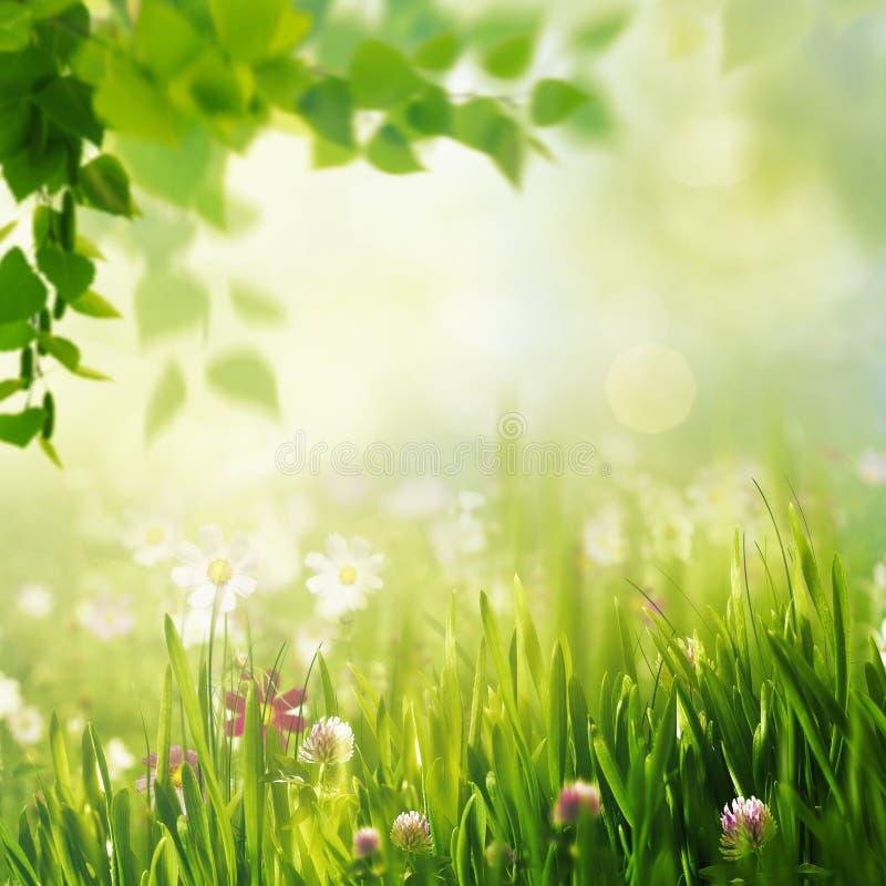 Piękno wiosna i lato krajobraz zdjęcia royalty free