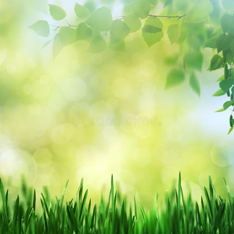 Piękno wiosna i lato krajobraz zdjęcie royalty free