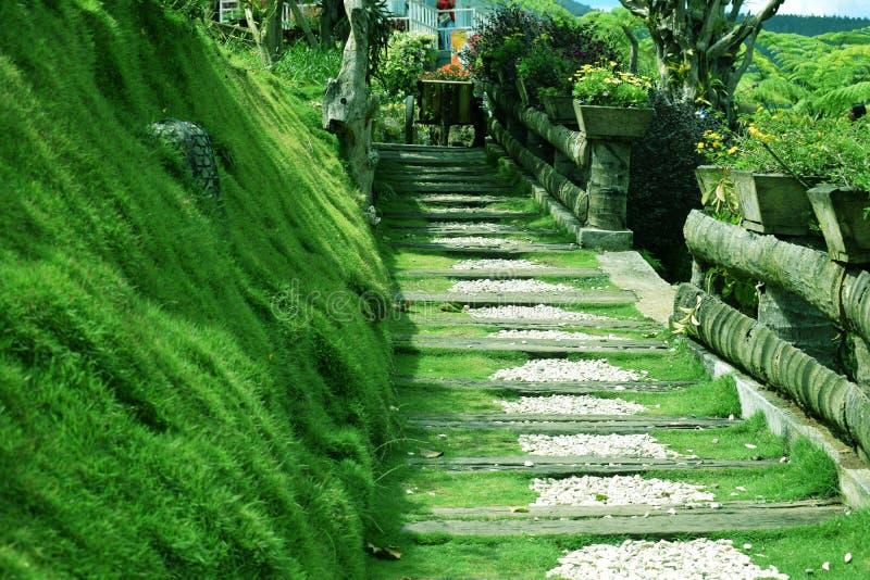 Piękno zielona trawa w parku w lembang Bandung górze zdjęcia royalty free
