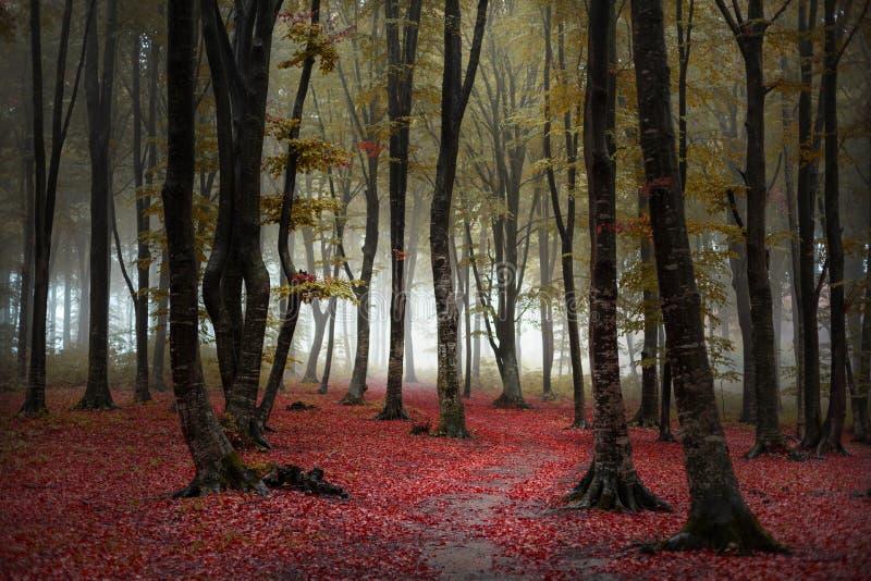 Piękny ślad jesiennego leśnego lasu Czerwone liście na ziemi Wróżki fotografia stock