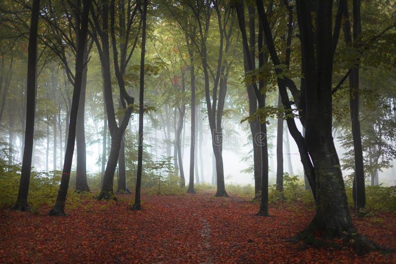 Piękny ślad jesiennego leśnego lasu Czerwone liście na ziemi Wróżki zdjęcie royalty free
