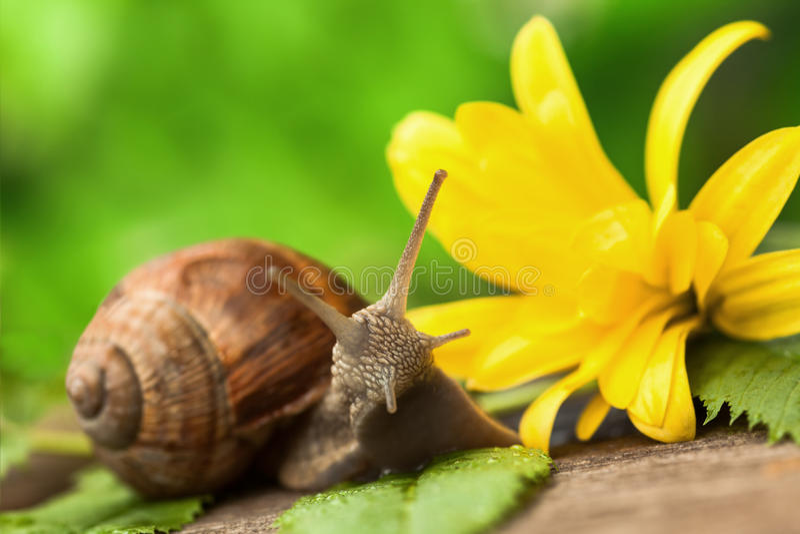 Piękny ślimaczek zdjęcia stock