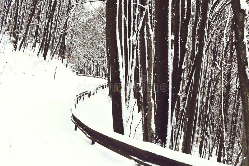 Piękny śnieżny footpath lub biała droga w zima lesie, drewnie, deciduous drzewach i śniegu w górach na wintertime, obrazy stock