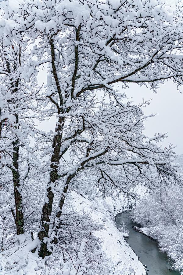 Piękny śnieżny halny las i Afips rzeka Chmurny sceniczny zima krajobraz Zachodni Kaukaz pionowo sceneria obraz royalty free