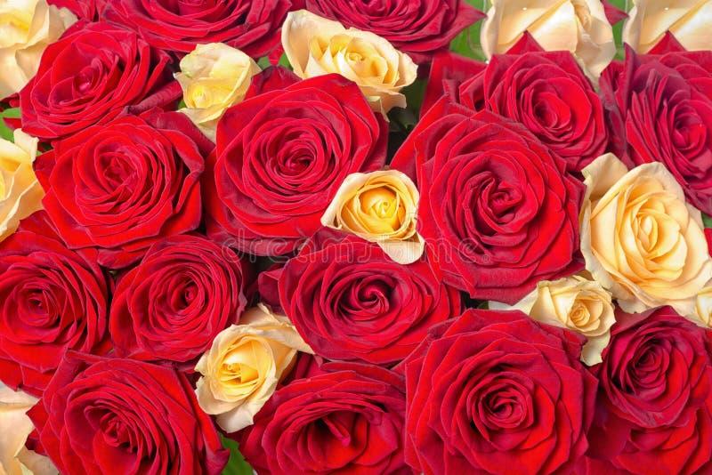 Piękny świąteczny tło bukieta koloru żółtego i czerwieni róża płynie obraz royalty free