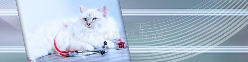 Piękny święty kot Burma z stetoskopem; panoramiczny sztandar obrazy stock