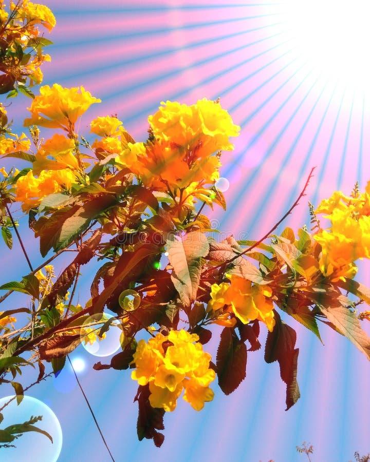 Piękny żółty kwiat l i pęcherzyki wektorowe tło zdjęcia stock