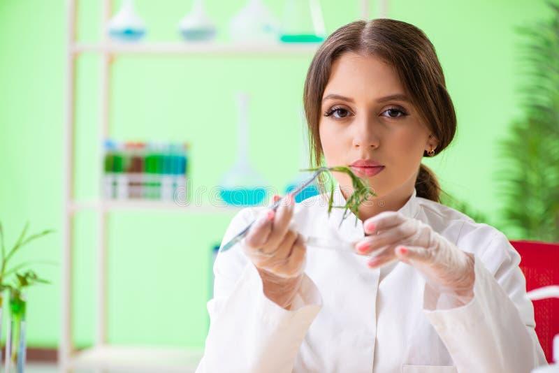 Piękny żeński biotechnologia naukowa chemik pracuje w lab obraz stock