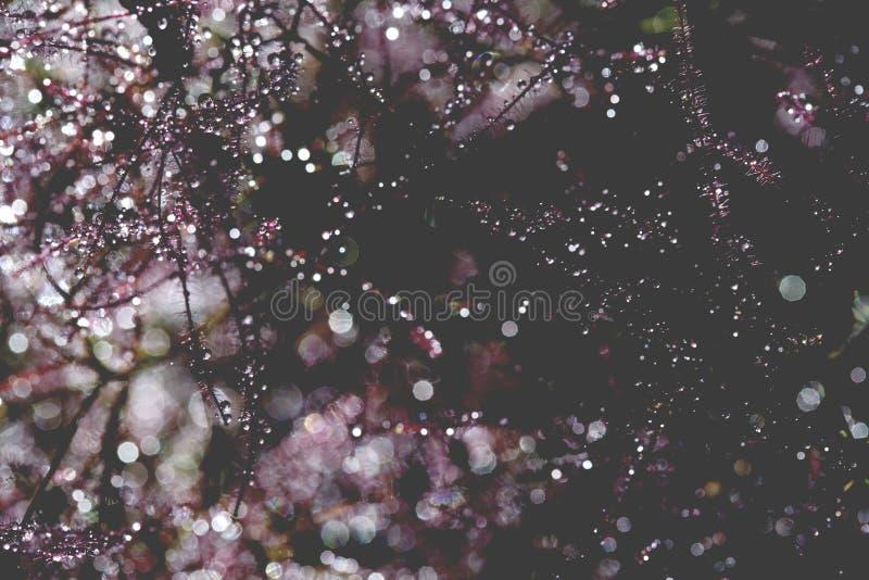 Piękny abstrakt, bokeh woda opuszcza na roślinie obraz royalty free