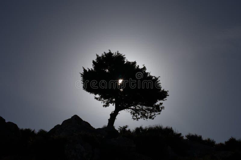Piękny afrykański zmierzch z pięknym drzewem na Amboseli Naturalnym parku, Maroko obraz stock