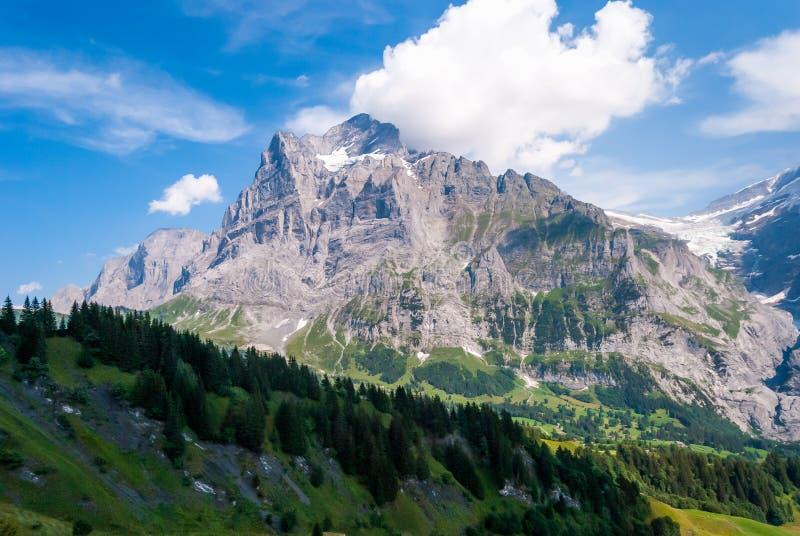 Piękny Alpejski krajobraz z szczytem wetterhorn, Grindelwald, Bernese Oberland, Szwajcaria, Europa zdjęcie royalty free