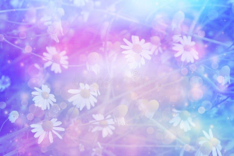 Piękny artystyczny tło z łąką stokrotki w marzycielskich kolorach ilustracja wektor
