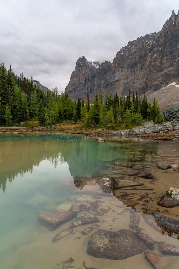 Piękny błękit barwił wodę wzdłuż płytkich brzeg Alpejski jezioro w Yoho parku narodowym Kanada obraz stock