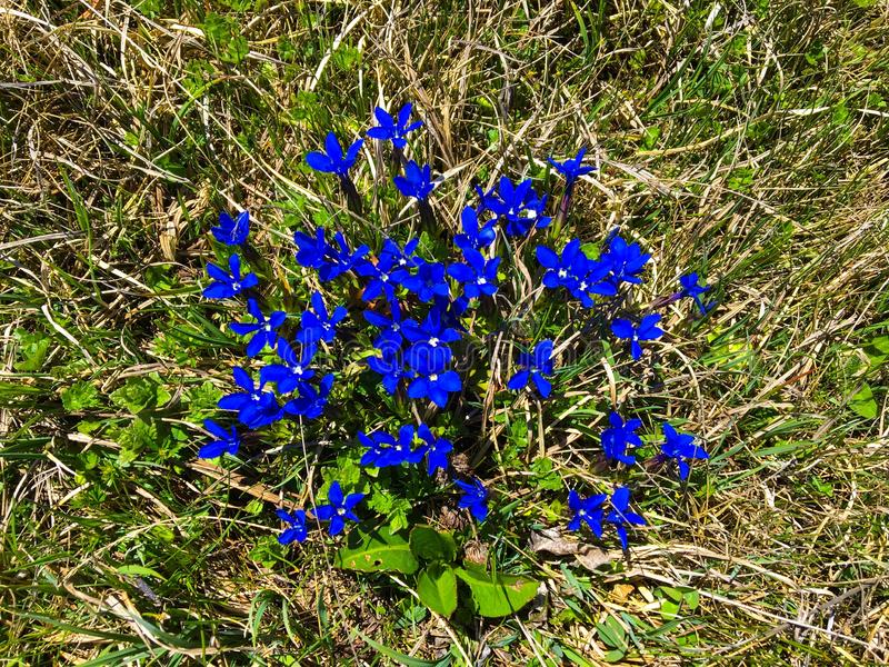 Piękny błękit kwitnie w Hiszpania blisko Francja fotografia stock