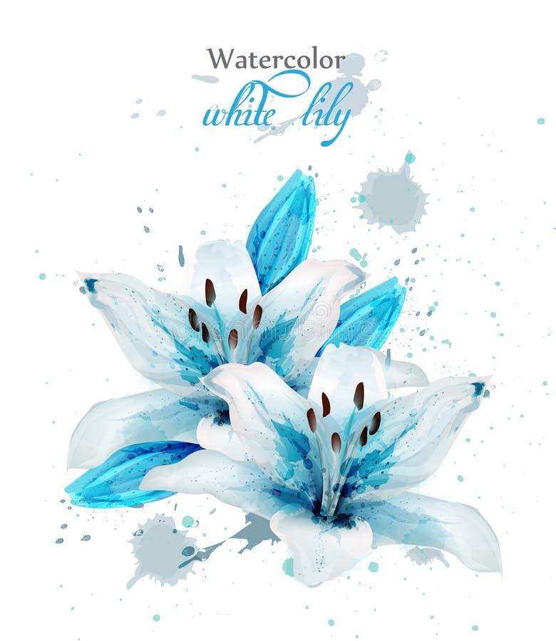 Piękny błękitny leluja kwiatu wektor Delikatny kwiecisty wystrój plusk farby obraz royalty free