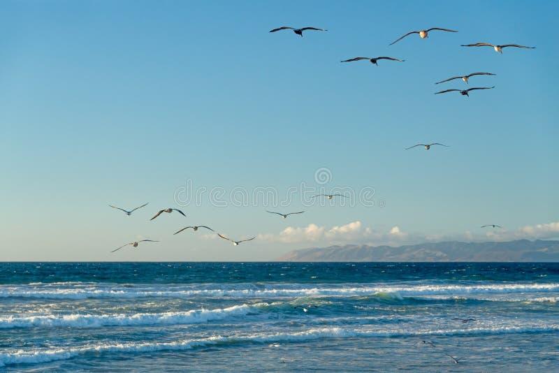 Piękny błękitny morze i kierdel ptaki, kalifornijczyk plaża obraz stock