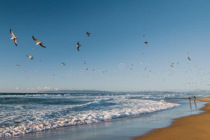 Piękny błękitny morze i kierdel ptaki, kalifornijczyk plaża obrazy stock