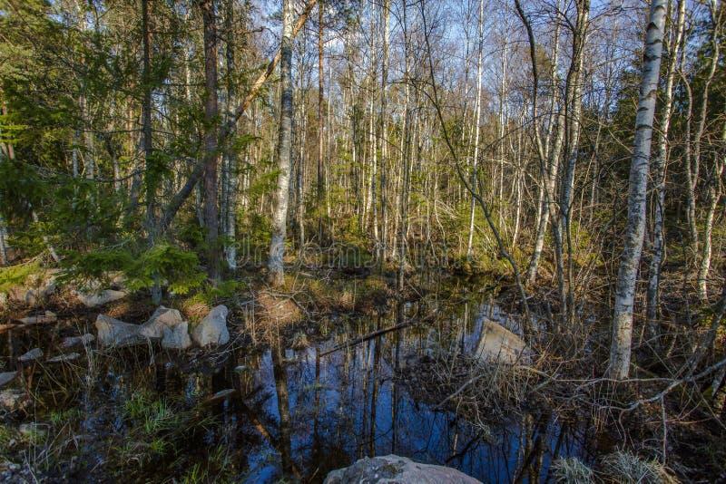 Pi?kny bagna natury krajobraz Drzewa odbicie na wodzie zdjęcie royalty free