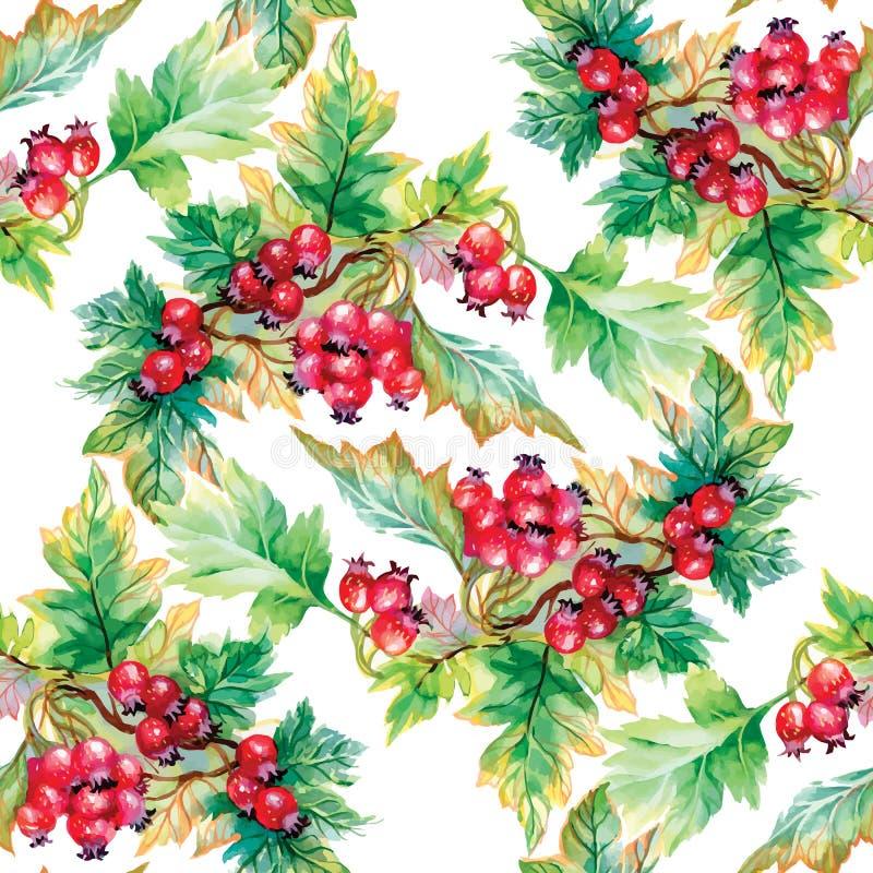 Piękny bezszwowy wzór w akwareli rozgałęzia się z rowan jagodami ilustracji