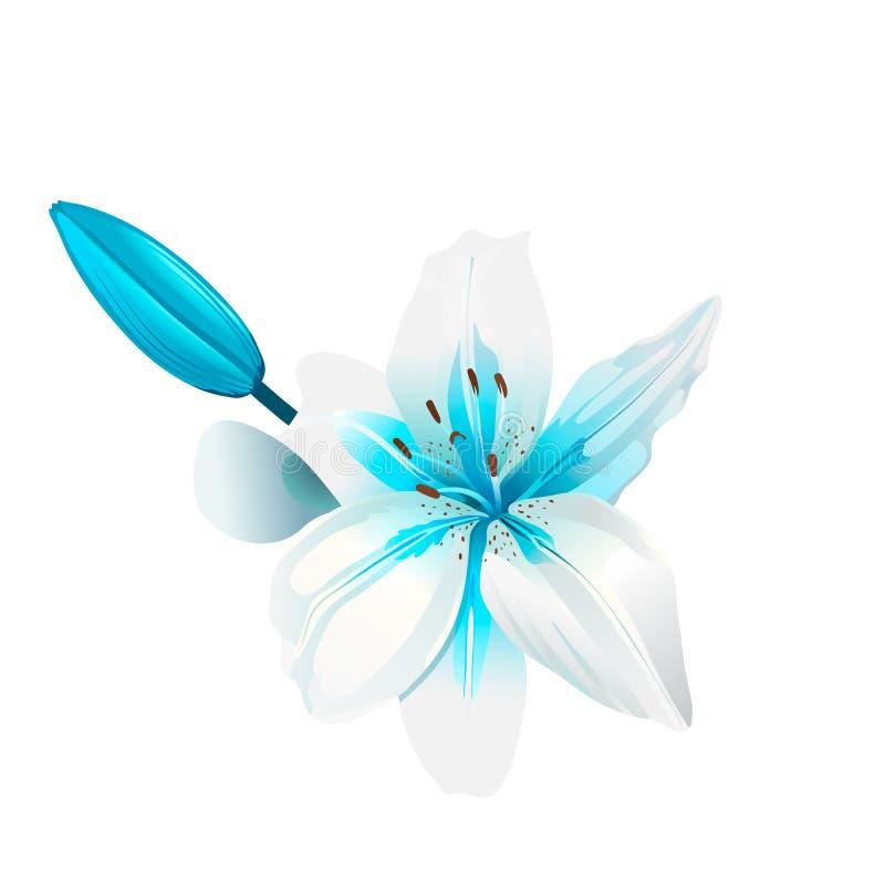 Piękny biały i błękitny kwiat odosobniony royalty ilustracja