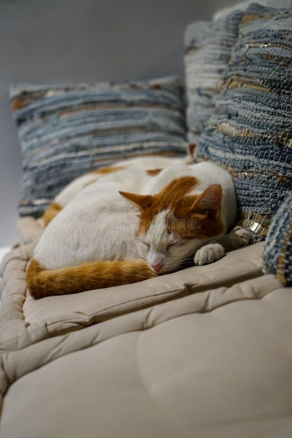 Piękny biały i brown kolorów kotów spać ciasny na białej tkaniny comfy poduszce z błękitnym pasek poduszek tłem na śpiącym dniu obrazy stock