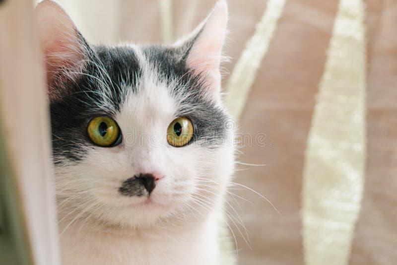 Piękny biały kot z szarość punktami na zieleni oczy, głowie i nos i obrazy stock