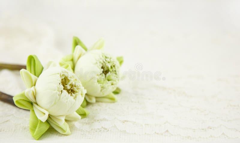 Piękny biały lotos z fałdu płatkiem na bielu zdjęcia stock