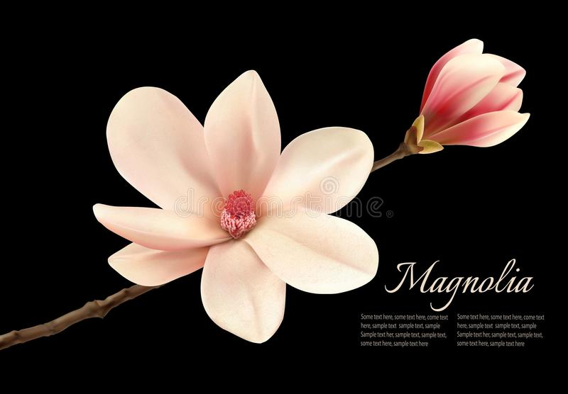 Piękny biały magnoliowy kwiat na czarnym tle ilustracji
