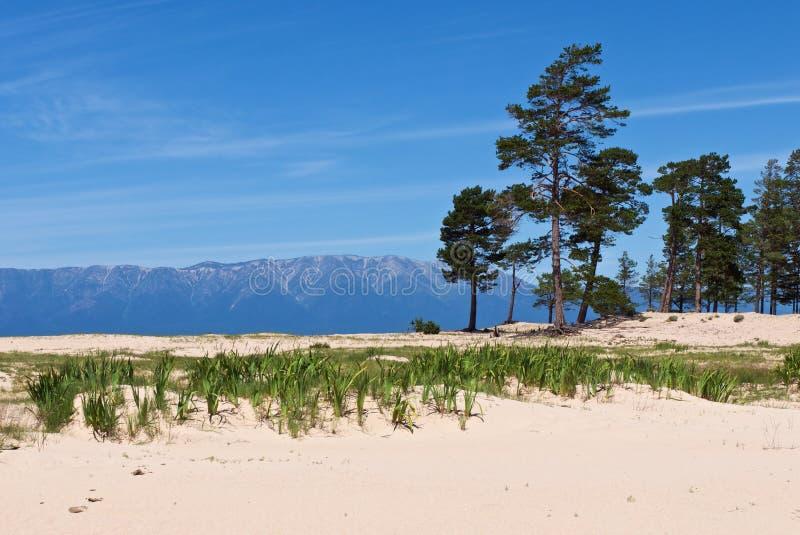 Piękny biały piaskowaty brzeg Jeziorny Baikal fotografia royalty free