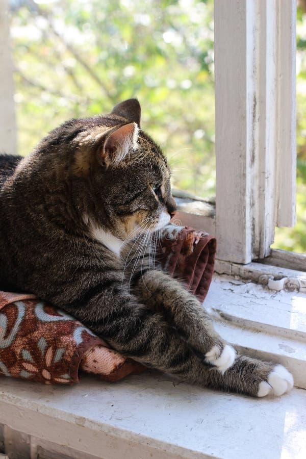 Piękny brązu tabby kot z dużymi zielonymi oczami na tle lato zielenieje obrazy stock