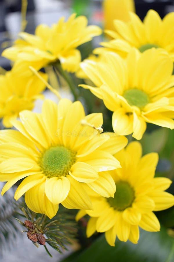 Piękny bukiet żółci kwiaty obrazy royalty free