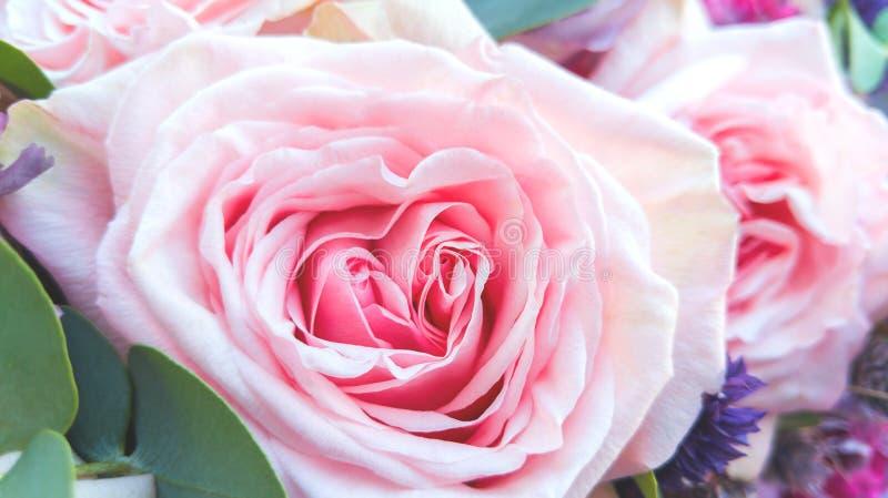 Piękny bukiet kwiaty w górę, dwa różowej róży fotografia stock