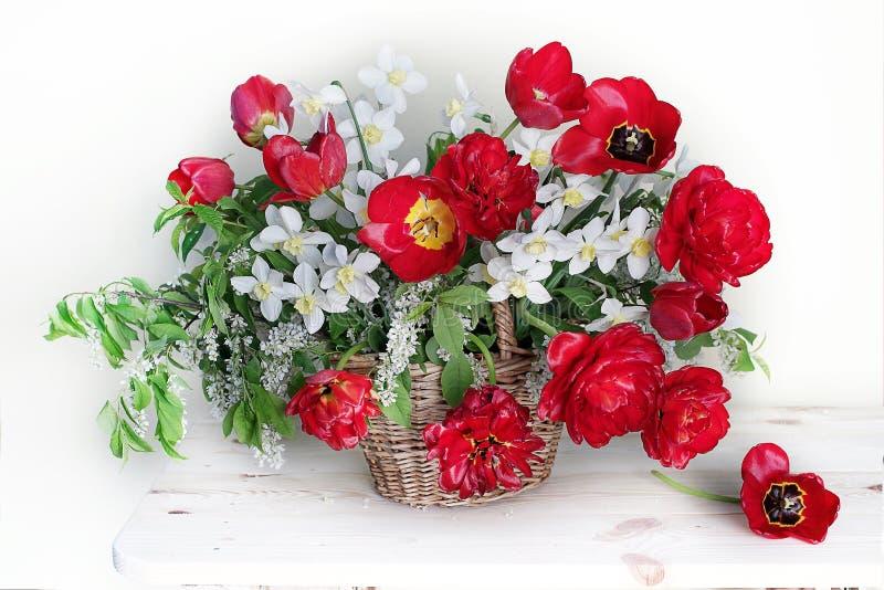 Piękny bukiet wiosna kwitnie w koszu Wciąż życie z czerwonymi tulipanami i daffodils zdjęcie stock
