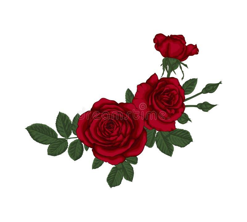 Piękny bukiet z czerwonymi różami i liśćmi Kwiecisty przygotowania royalty ilustracja