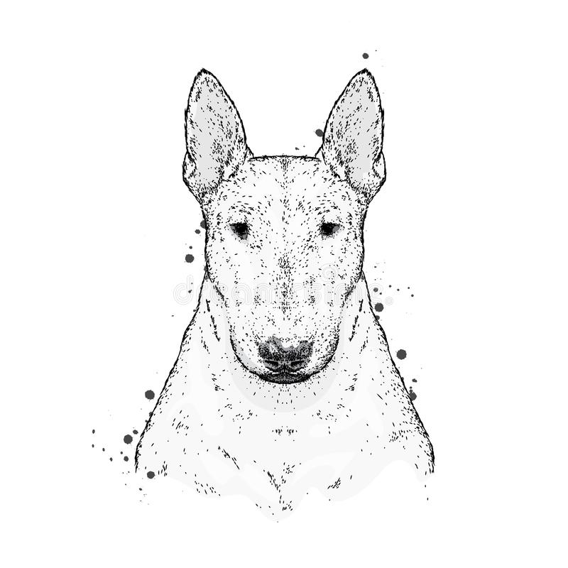 Piękny Bull terrier z krawatem z cierniami Moda & styl Odziewa i akcesoria również zwrócić corel ilustracji wektora royalty ilustracja