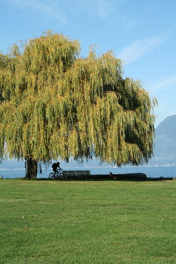 piękny Canada wybrzeże Vancouver fotografia royalty free