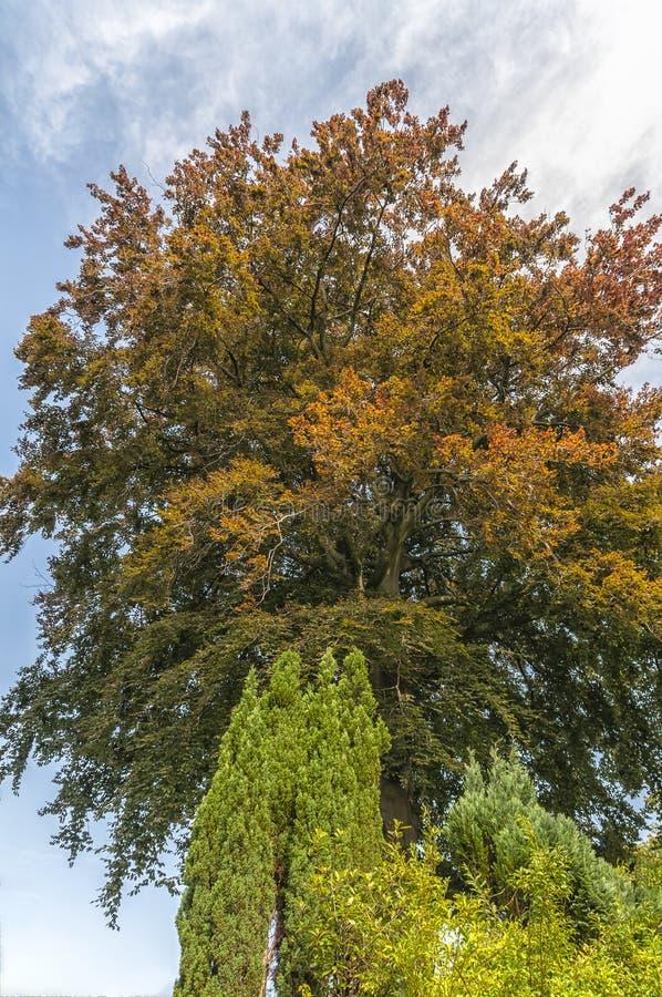Piękny colourful drzewo z brown i zielonymi kolorami zdjęcia royalty free