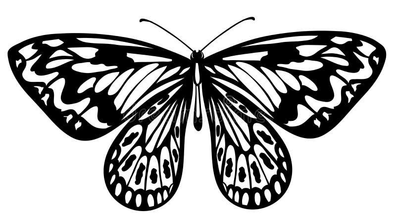 Piękny czarny i biały motyl odizolowywający na bielu royalty ilustracja