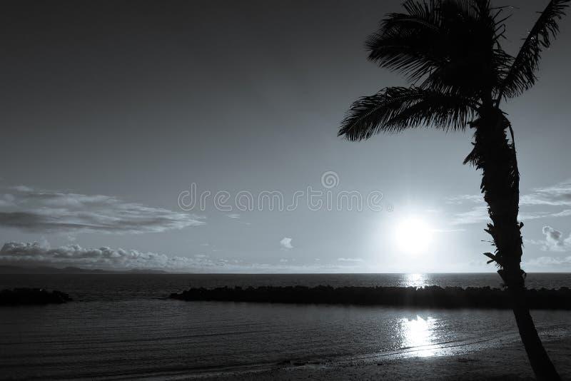Piękny czarny i biały wizerunek drzewko palmowe na plaży obrazy royalty free