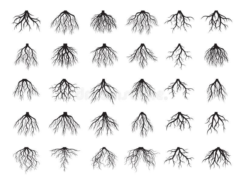 Piękny czerń Zakorzenia drzewa również zwrócić corel ilustracji wektora royalty ilustracja