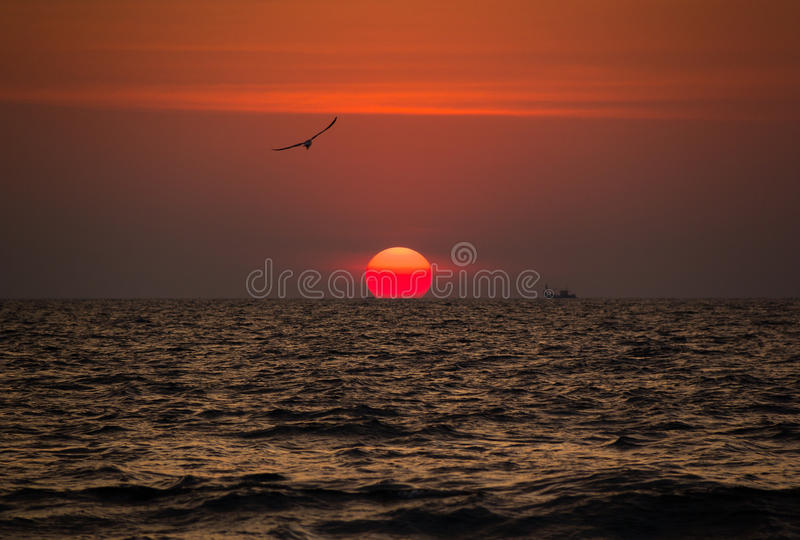 Piękny czerwony zmierzch z ptakami i statkami na Goa plaży, India zdjęcia stock