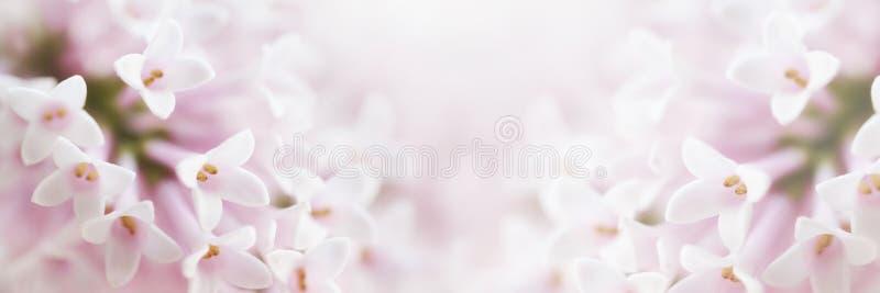 Piękny czuły delikatny delikatny kwiatu tło z małym pi fotografia royalty free