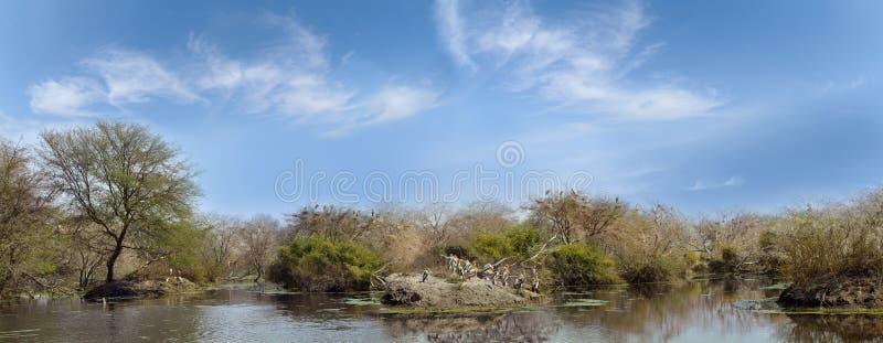 Piękny dżungli Keoladeo park narodowy indu fotografia royalty free