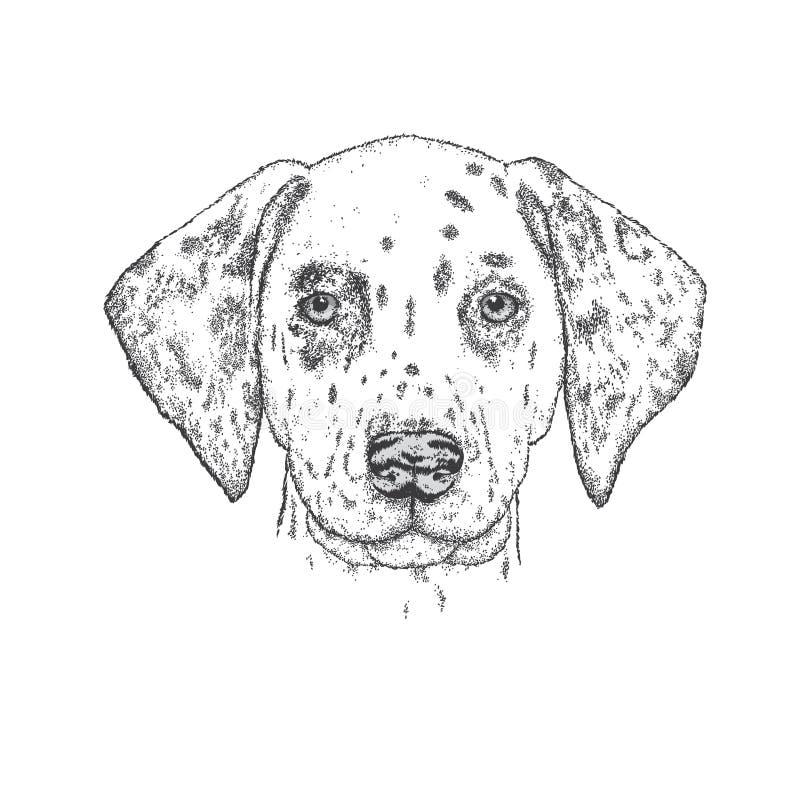 Piękny dalmatian malujący ręką Wektorowa ilustracja dla karty plakata lub, druk na odziewa pies jest portret Pedigreed szczeniak ilustracja wektor