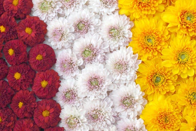 Piękny dandelion tło, wielo- barwioni kwiaty kwitnie obrazy stock