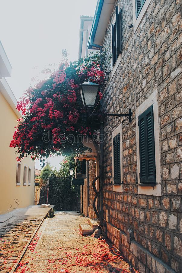 Piękny dom z różowym kwiatonośnym drzewem w Herceg-Novi fotografia royalty free