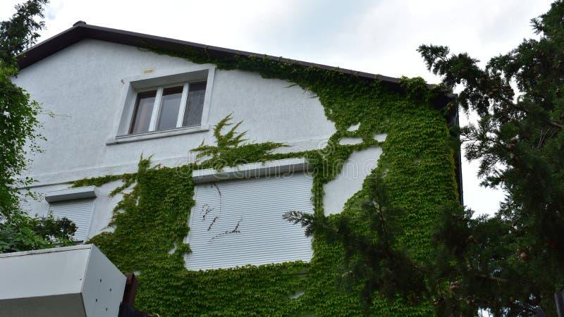 Piękny dom zakrywający z greenery fotografia royalty free