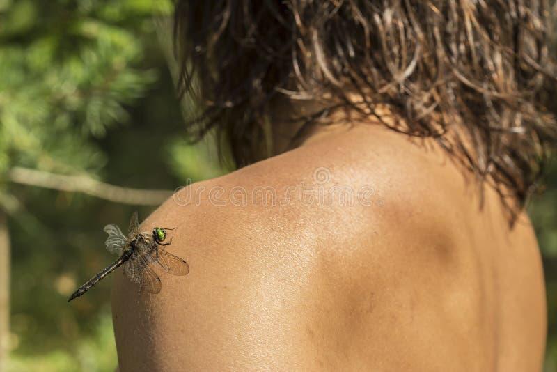 Piękny dragonfly z uszkadzam skrzydło siedzi na ramieniu t zdjęcia stock