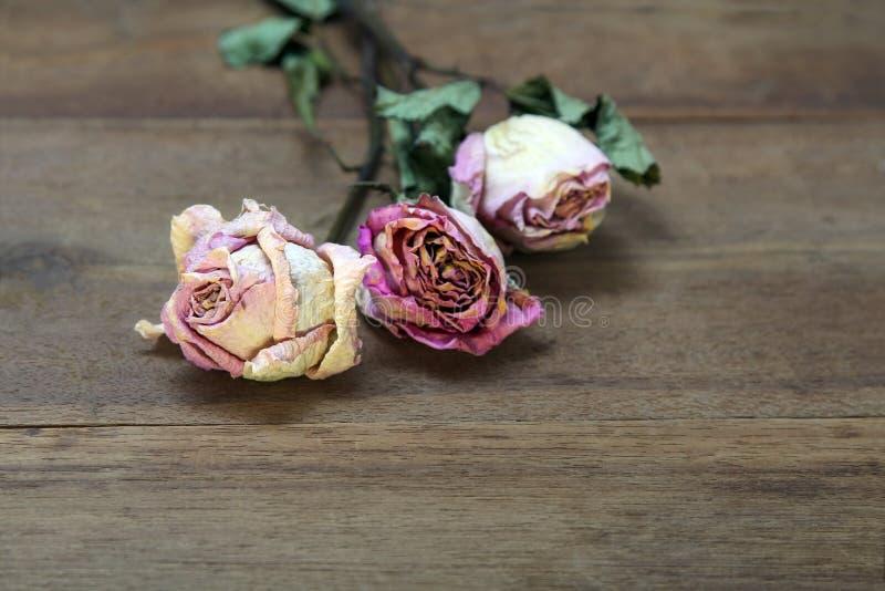 Piękny drewniany tło z wysuszonymi różowymi różami zdjęcia stock