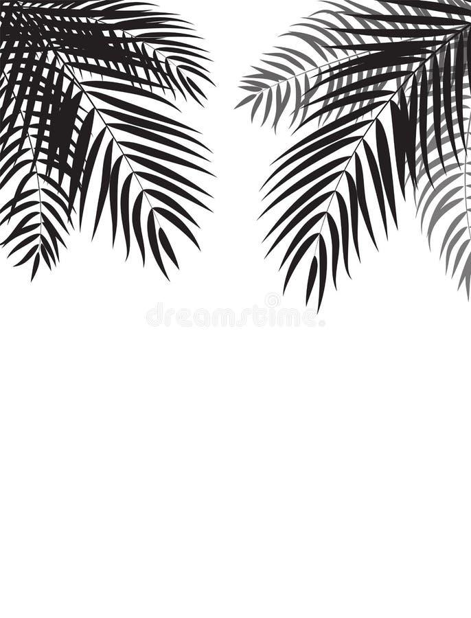 Piękny drzewko palmowe liścia sylwetki tła wektor ilustracji